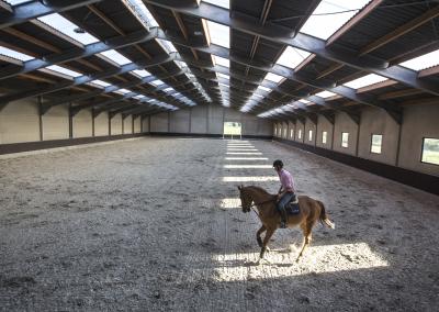 horse-transport-hal