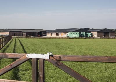 horse-transport-veld