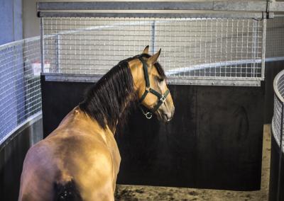 horse-transport-paardenstal-1