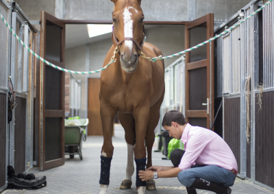 horse-transport-paardenstal-2